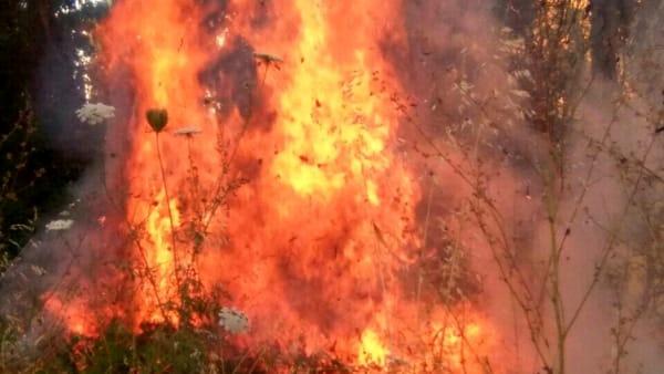 Incendio a Fiumicino: bruciano 15 ettari di bosco