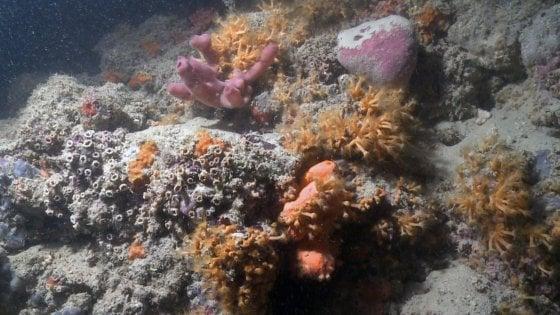 Puglia, scoperta sensazionale : barriera corallina a largo di Monopoli come quelle delle Maldive