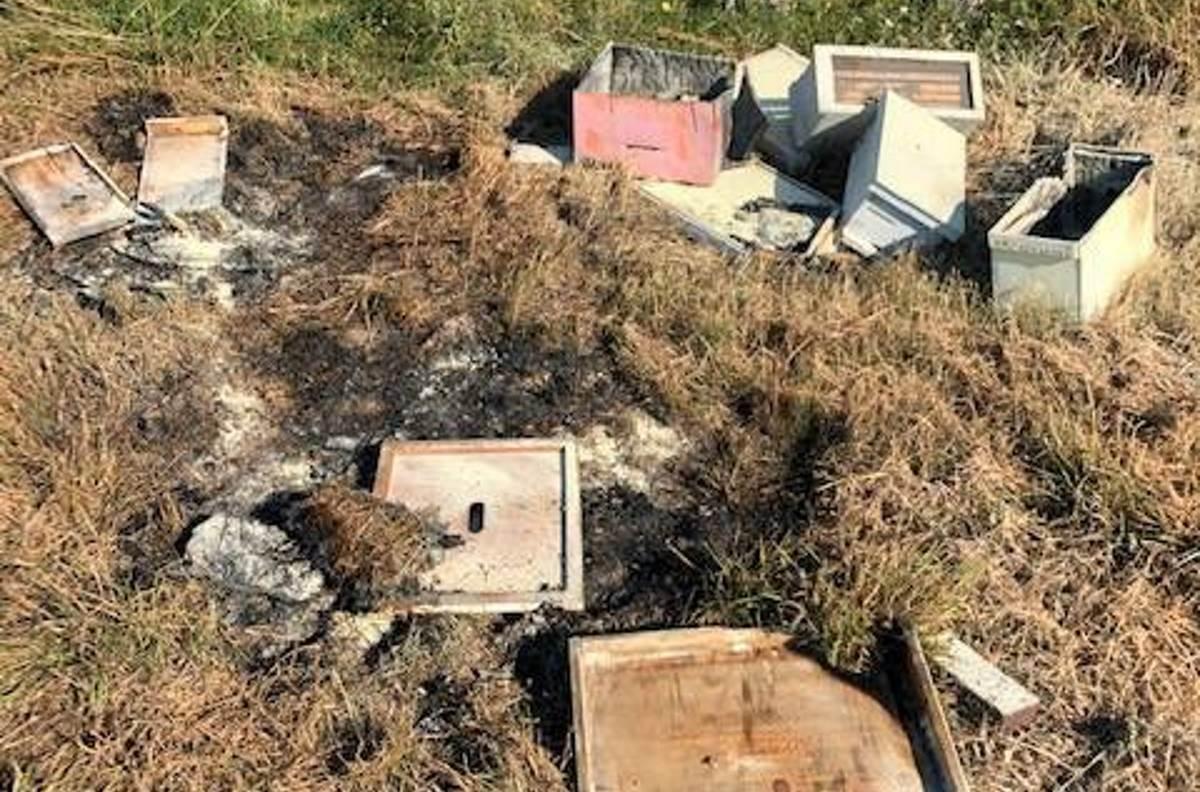 Disastro ambientale in Texas: vandali bruciano mezzo milione di api