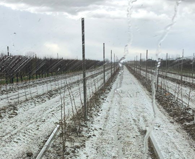 Locali TEMPORALI in atto al Nord: forte grandinata nel ravennate, campi imbiancati