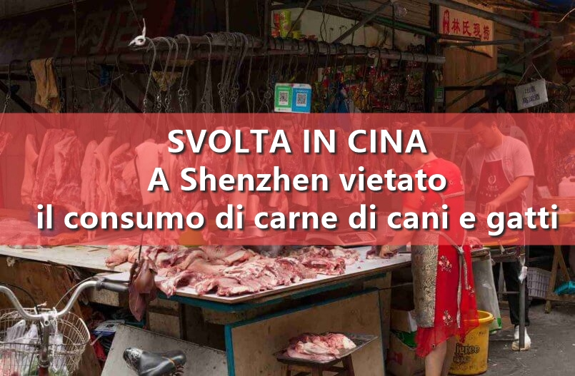 Storica svolta in Cina: a Shenzhen vietato il consumo di carne di cani e gatti