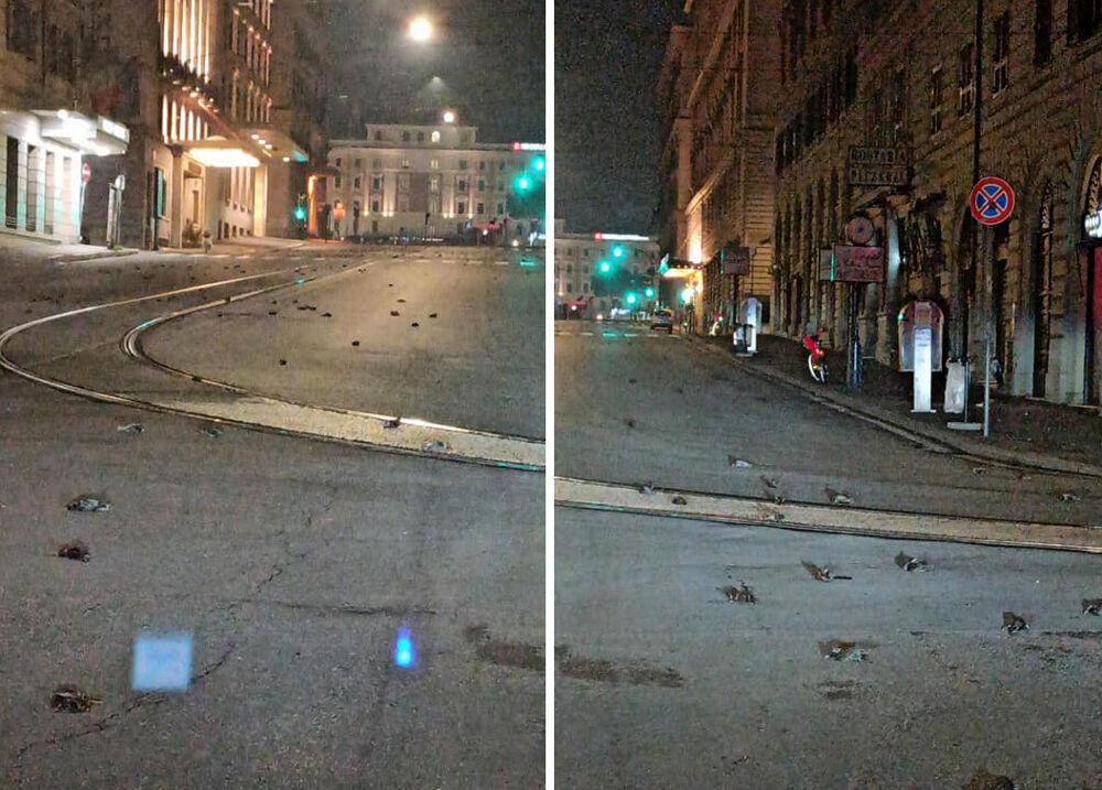Botti di capodanno: centinaia di uccellini morti a Roma ma anche cani e gatti in tutta Italia