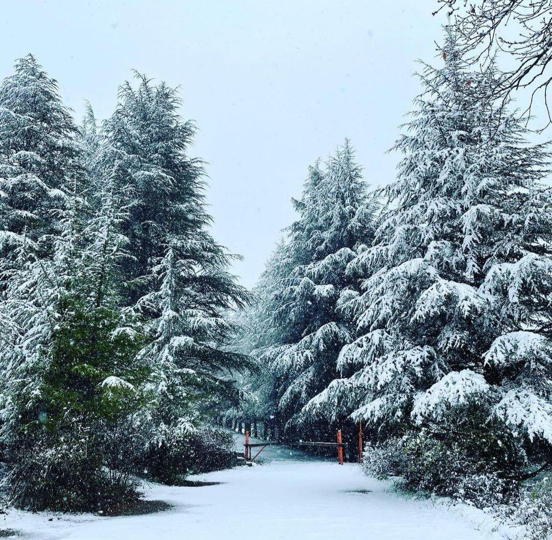 Altro che primavera: forti nevicate in Sardegna, Fonni tutta bianca