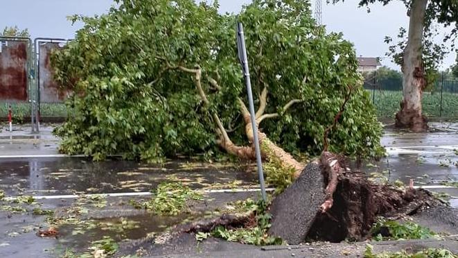 Violento temporale su Vicenza, vento tempestoso sradica molti alberi