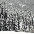 VALANGHE: cadono soprattutto durante forti nevicate o il giorno seguente